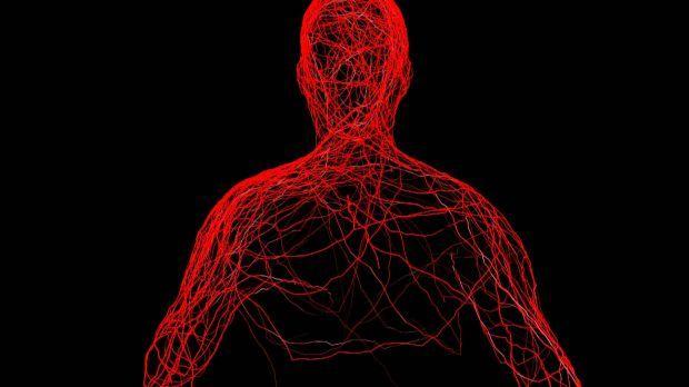Sanguíneo como fluxo no humano aumentar o corpo