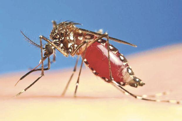 Dengue – Diagnóstico, tratamento e prevenção
