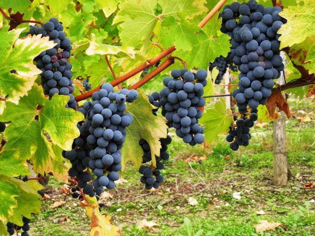 Tipos de vinhos e uvas