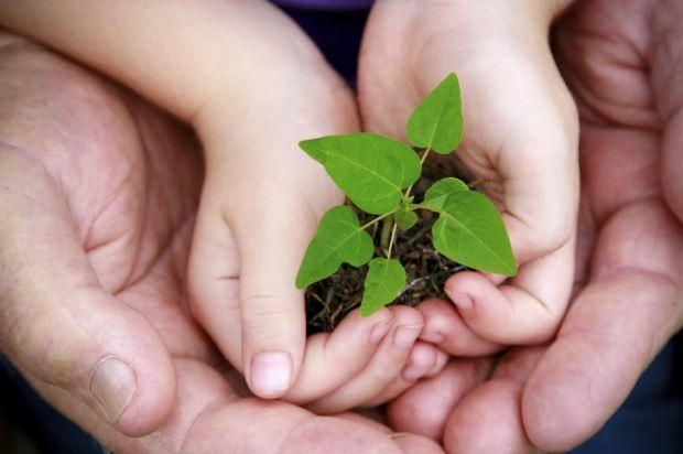 Como você pode fazer parte do combate ao desmatamento?