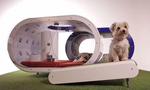 Samsung inova com Dream Doghouse