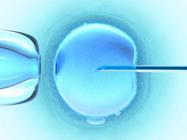 Como fazer inseminação artificial