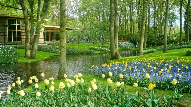 Dicas de manutenção de plantas no jardim  Ambiental  Cursos iPED
