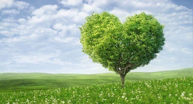 3 fatos curiosos sobre Ecologia