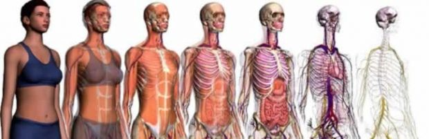 Principais órgãos do corpo humano