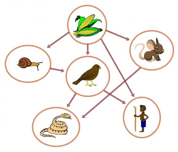 O que são as teias e cadeias alimentares?