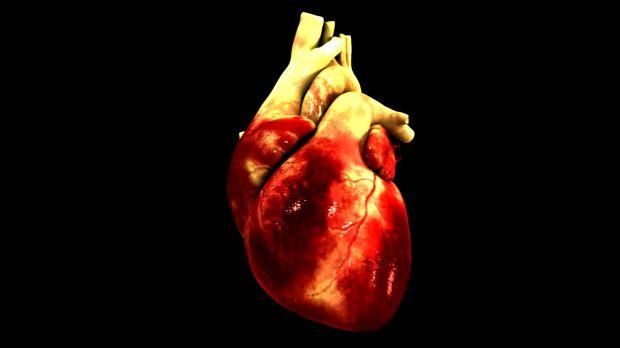 Como funciona a  Circulação Sanguínea?