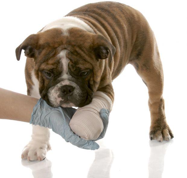 acidentes de animais domésticos