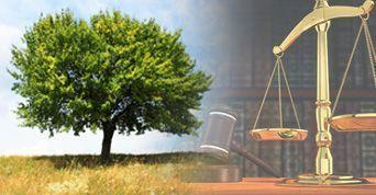 curso de direito ambiental...