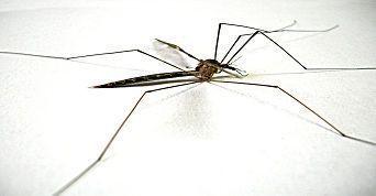 Ilustração - Curso de Dengue - Diagnóstico, tratamento e prevenção