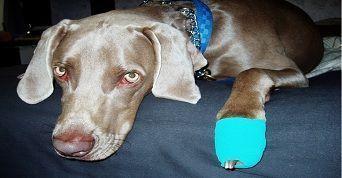 curso de urg�ncia e emerg�ncia veterin�ria...