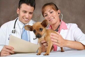 curso de cuidados cl�nicos no p�s-operat�rio de c�...