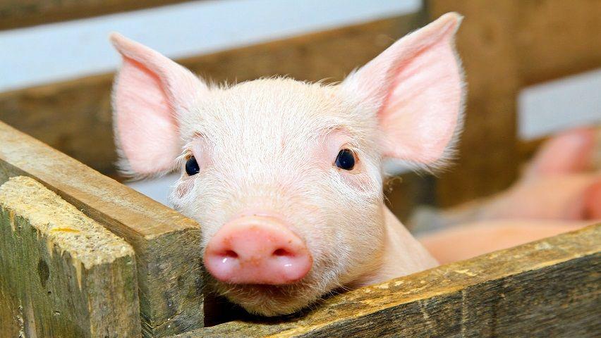 Curso de Bem-Estar Animal: Humanização