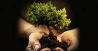 Clique aqui para visitar a página online do Curso de Práticas de Sustentabilidade
