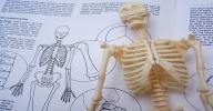 Clique aqui para visitar a página online do Curso de Biologia 2