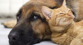 Imagem do Curso de Bem-Estar Animal