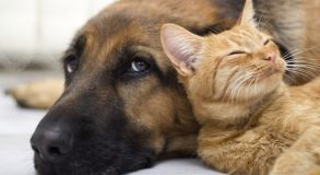 Curso de Introdução ao Bem-Estar Animal