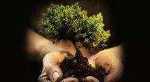 Ilustração - Curso de Práticas de Sustentabilidade