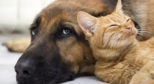 Curso de Bem-Estar Animal