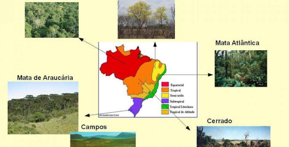Biomas, Domínios e Vegetação do Brasil